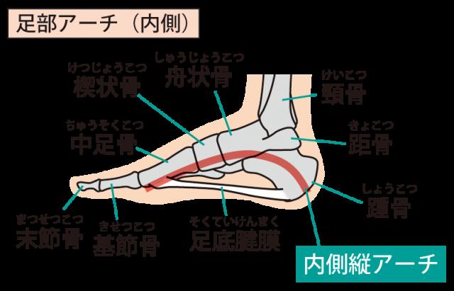 足アーチ内側