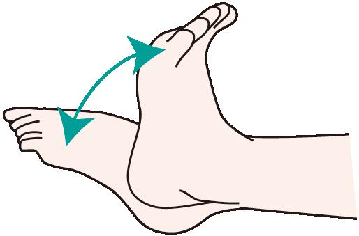 足首の上下運動